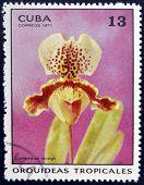 CUBA - CIRCA 1971: A stamp printed in Cuba dedicated to tropical orchids shows cypripedium mowgh