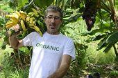 Organic Farming: Farmer carrying bananas
