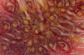 Fig Texture