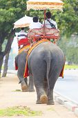 Ayuthaya Thailand-september 6 : Tourist Riding On Elephant Back walking oAyuthaya Thailand-n street