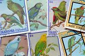 Parrots on stamps