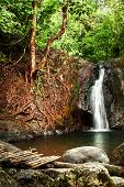 Tropical Rain Forest Landscape With Wooden Bridge, Jungle Plants And Of Small Waterfall