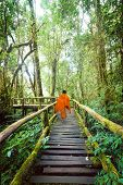 Buddhist Monk At Wooden Bridge In Misty Tropical Rain Forest. Sun Beams Shining Through Trees At Jun