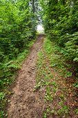 Trekking Trail Leading Through Summer Landscape Of Deep Highland Forest At Carpathian Mountains. Ukr