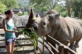 Woman feeding the rhinoceros  at zoo
