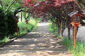 Walkway To Chureito Pagoda, Arakura Sengen Shrine In Japan