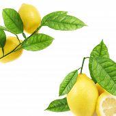 Lemons over the white background