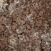 Bad quality earth soil