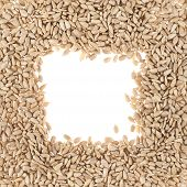 Square sunflower seeds frame