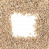 Square sunflower seeds frame