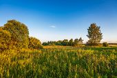 Green field in sunset light