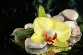 Orchid flowers with water drops and pebble stones on dark colorful background