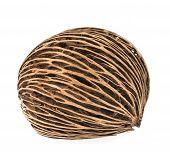 image of seed  - Cerbera oddloam - JPG