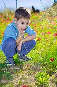 8 Year Old Boy With In A Field Of Wild Red Flowers