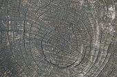 Dry Wood Texture Of Cut Tree