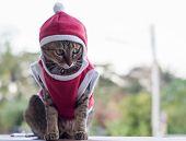 Close Up Santa Ordinary Cat