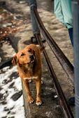 foto of begging dog  - Wet red dog with sad eyes begging for food on the street of European city - JPG