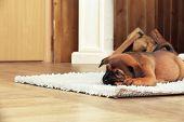 Cute puppy lying on carpet near fireplace in room