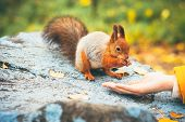 Squirrel eating nuts from woman hand forest on background