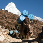 stock photo of caravan  - caravan of yaks with goods  - JPG