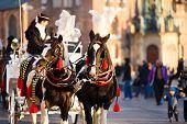 Horses in Krakow