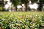 Blur Grass In Garden Background