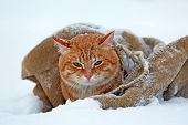 Cute red cat wrapped in blanket on snow background