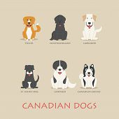 stock photo of newfoundland puppy  - Set of canadian dogs eps10 vector format - JPG