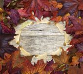 Beautiful Colorful Square Background With Red Leaves And Sycamore Wings On Old Wooden Board.