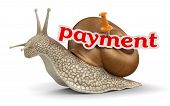 payment Snail (clipping path included)