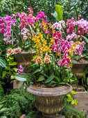 foto of greenery  - Orchid arrangement in stone vases amidst lush greenery - JPG