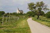 Bicycle Lane And Vineyards Near Rust, Austria