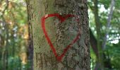 Reg heart on tree bark