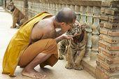 Buddhist monk kisses indochinese baby tiger in Saiyok, Thailand.