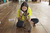 Thai woman feeds baby tiger with milk in Saiyok, Thailand.