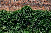 Green Brick Facade Wall