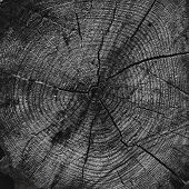 Abstract Wooden Background, Circles Patterns On The Stump