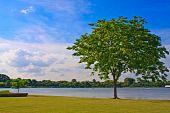 Lonely tree near lake