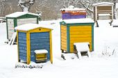 Colorful Wooden Beehives In  Winter Garden On Snow