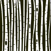 picture of birching  - Birch trees background  - JPG