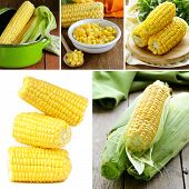 stock photo of corn  - collage of organic fresh and canned corn - JPG