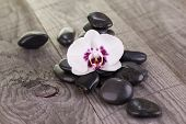 stock photo of moth  - White Moth orchid and black stones on weathered wood close - JPG