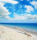 foto of driftwood  - white driftwood in a tropical beach on a cloudy day - JPG