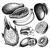 image of pawpaw  - Vector collection of ink hand drawn exotic fruits sketch for kitchen and restaurant design - JPG