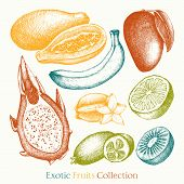 foto of pawpaw  - Vector collection of ink hand drawn exotic fruits sketch for kitchen and restaurant design - JPG