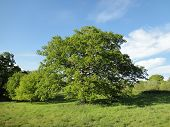 foto of backwoods  - Rural forest landscape photographed at Shobrooke Park in Shobrooke in Devon - JPG