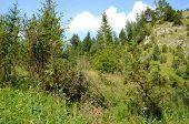stock photo of pieniny  - Mountains  - JPG