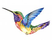 picture of hummingbirds  - Hummingbird tattoo - JPG