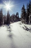 image of animal footprint  - Snow covered road in the forest with animal footprints - JPG