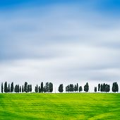 pic of row trees  - Cypress Trees rows on hill top rural landscape in Chianti land near Florence - JPG